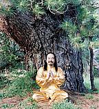 Group Healing & Self Healing with Master Lu